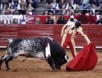 El regreso del toro